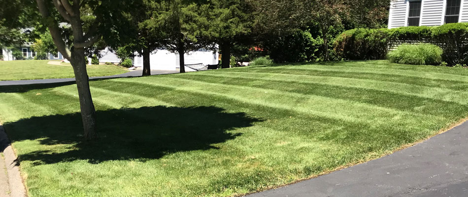 A fertilized healthy green lawn in front of a home in Hopkinton, RI.